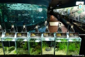 森の中の水族館。 山梨県立富士湧水の里水族館