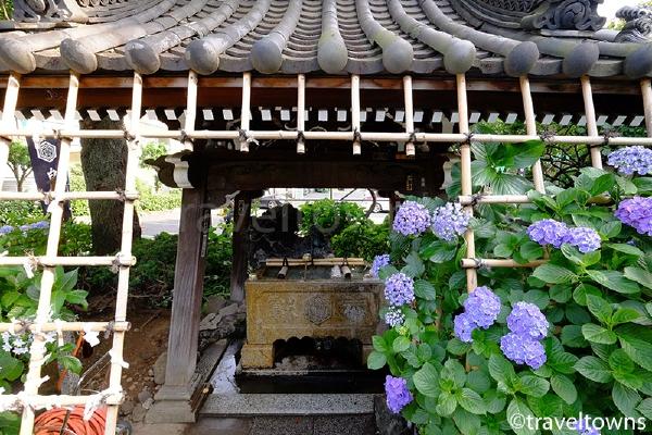 手水舎と紫陽花