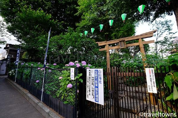 紫陽花観賞で一般開放される場所