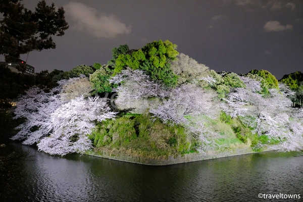 日本武道館方向の桜