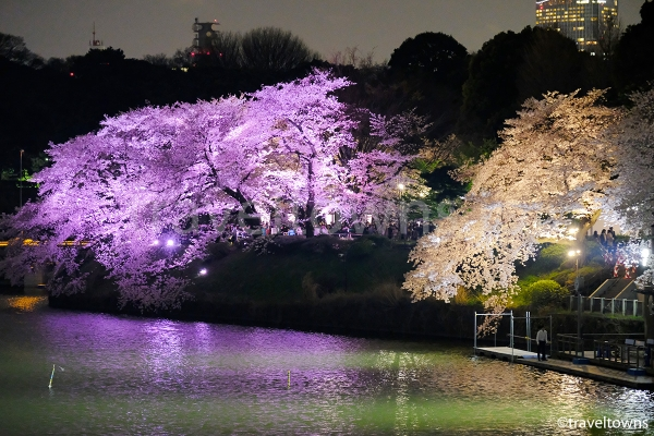ピンクのLEDに照らされる夜桜