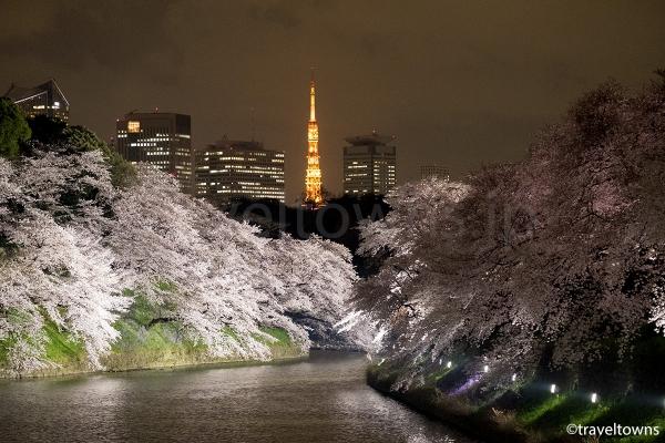 千鳥ヶ淵の夜桜と東京タワー
