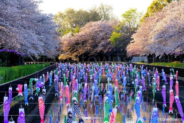 群馬県館林の鶴生田川で桜と圧巻の数を誇るこいのぼりを楽しむ(2017年)