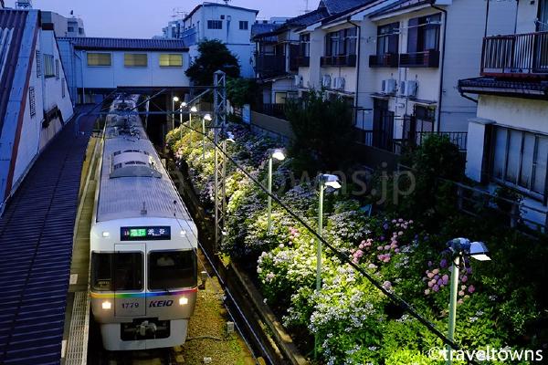 2016年も井の頭線の東松原駅であじさいライトアップ