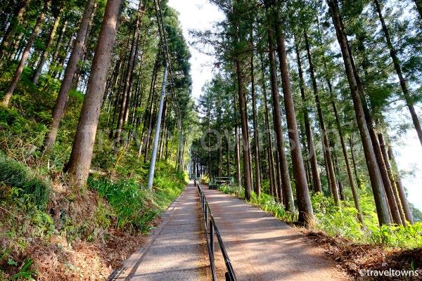 羊山公園の急坂を登っていくと近道