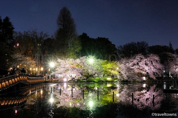 ボート乗り場近くから眺める桜