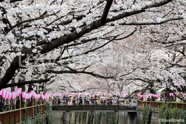 中目黒・目黒川沿いの桜がまもなく見頃に(2018年)
