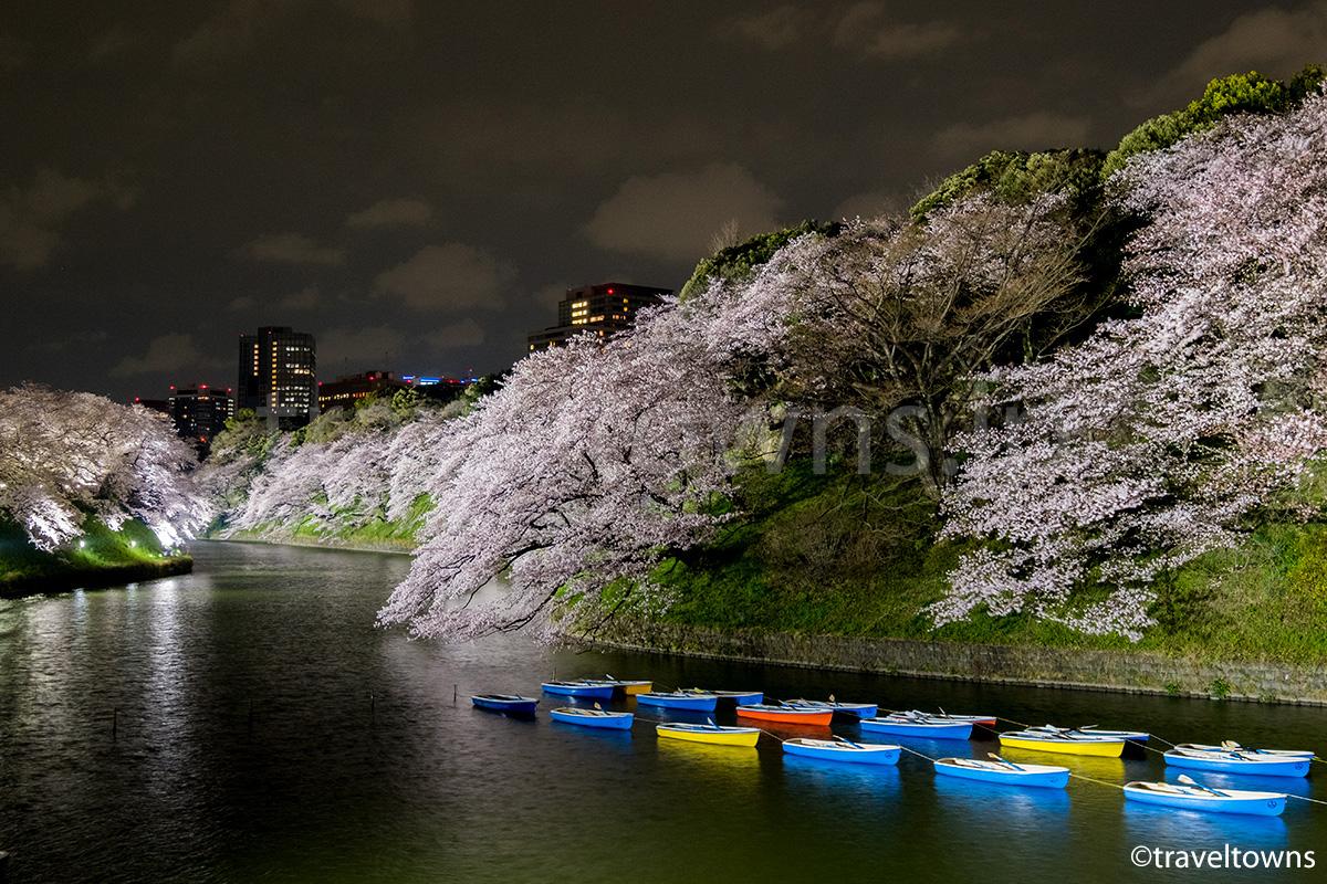 2017年、千鳥ヶ淵の桜が見頃に、夜桜で賑わう