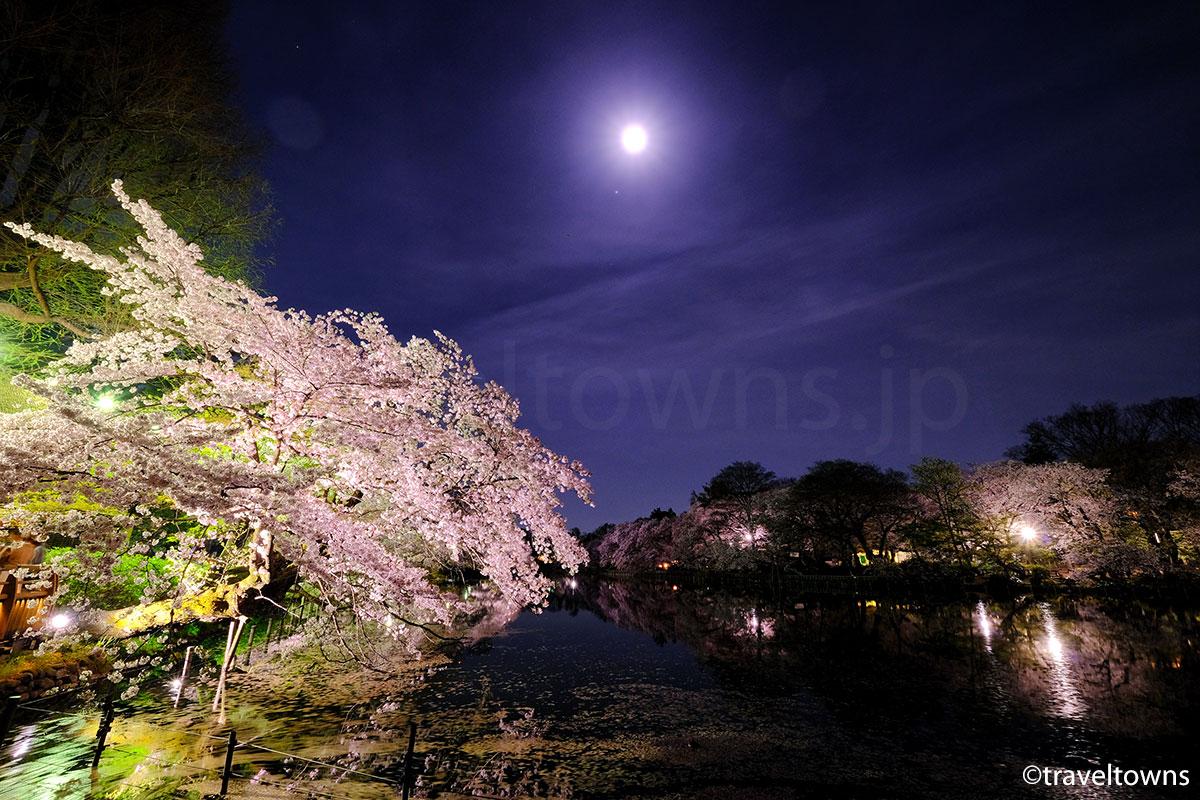 2017年、吉祥寺・井の頭公園の夜桜が見頃に