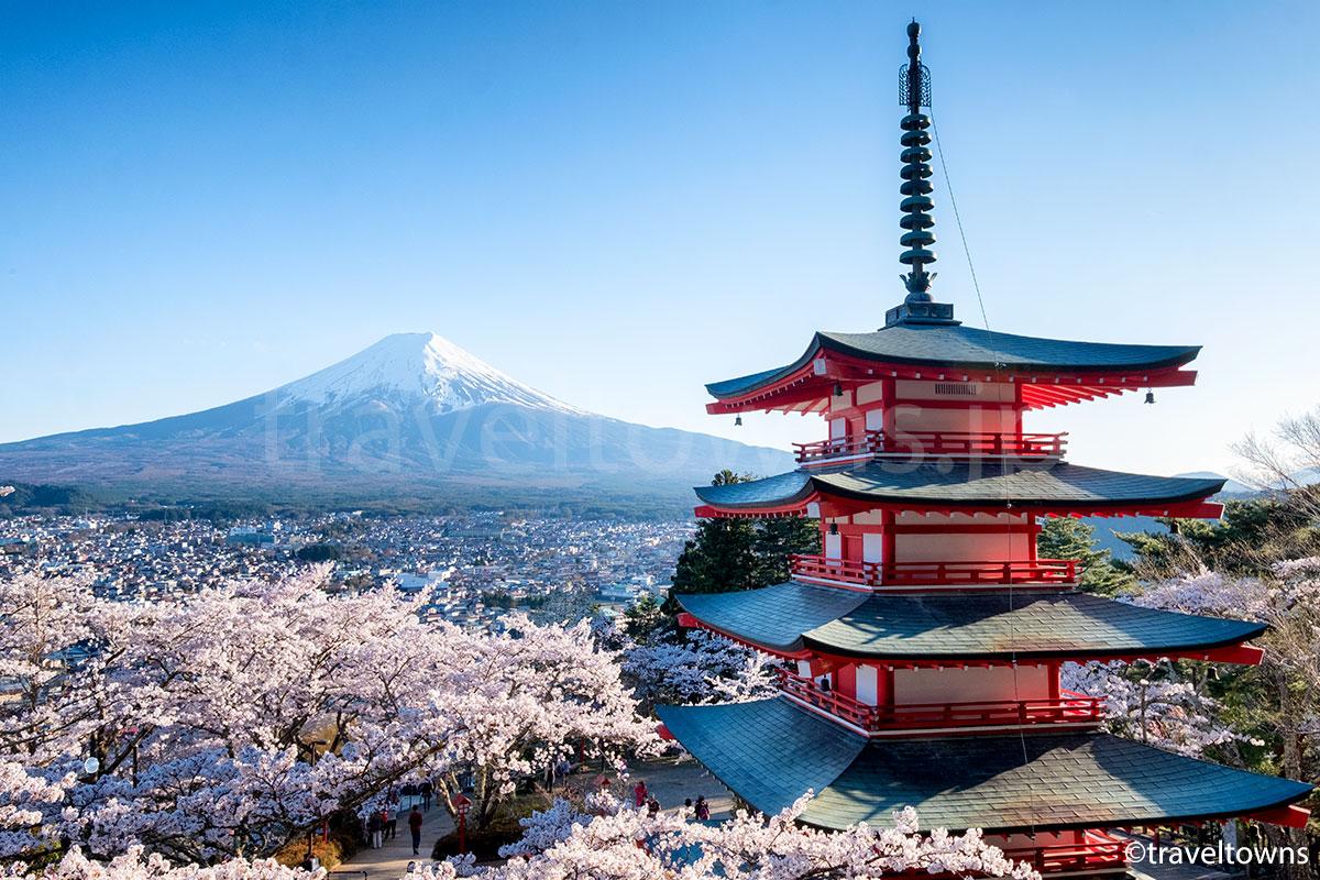 2017年、新倉山浅間公園の桜が満開、富士山と五重塔を一緒に望む