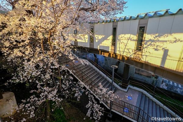 春にはホーム脇の桜も楽しめる