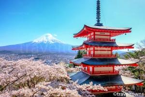 新倉山浅間公園 桜まつり