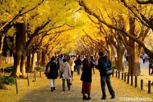 神宮外苑 いちょう祭り