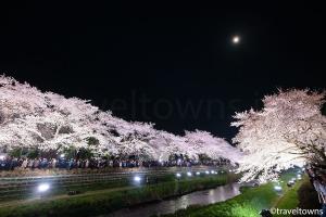 【2020年中止】野川の桜ライトアップ