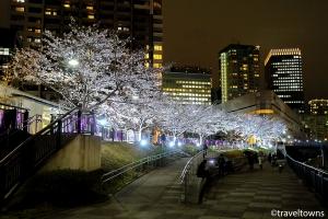 五反田ふれあい水辺広場 さくらのライトアップ
