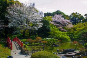 紀尾井町桜まつり