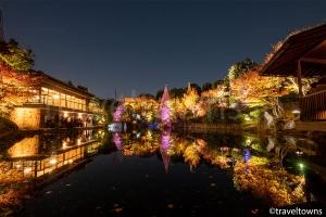 目白庭園 秋の庭園ライトアップ