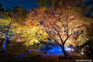 六義園 紅葉と大名庭園のライトアップ