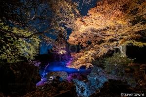 新宿御苑 紅葉ライトアップ