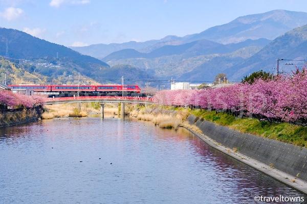駅からすぐの場所でも河津桜が見られる