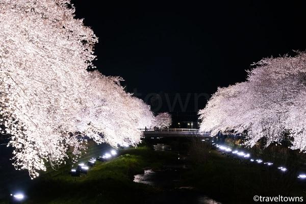 橋からも桜並木のライトアップが見られる