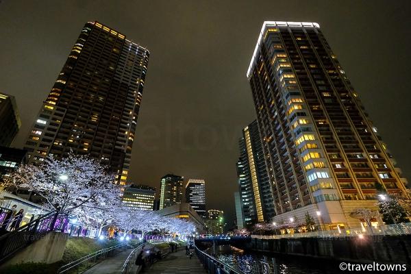 目黒川沿いの高層マンション群の中で輝く桜ライトアップ