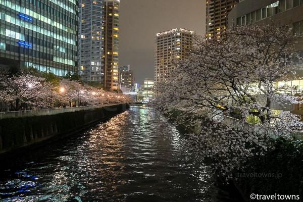 ライトアップされていない場所も桜並木が続く