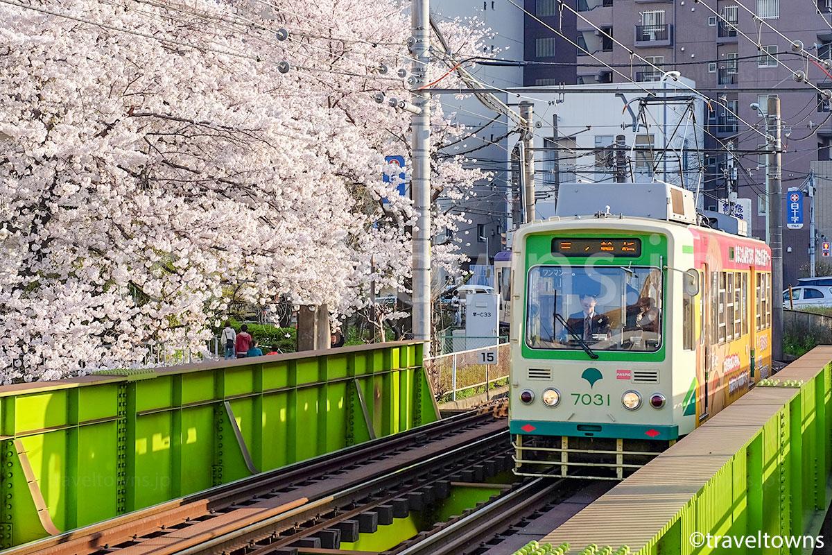 桜満開の神田川を渡る都電荒川線