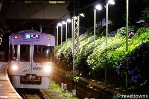 東松原駅のアジサイ(ライトアップ)