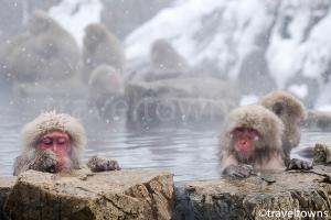 地獄谷野猿公苑(スノーモンキーパーク)