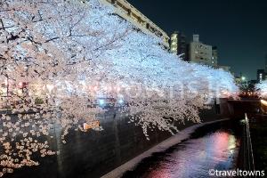 目黒川の桜並木(中目黒)