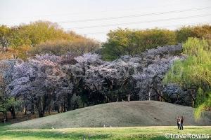 くじら山(武蔵野公園)