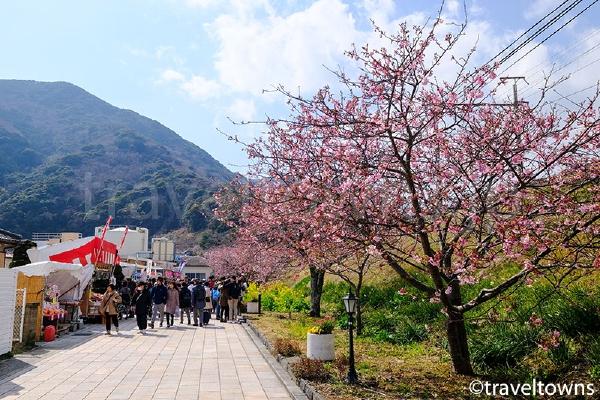 河津駅から河津川へと続く線路沿いの道でも桜が楽しめる