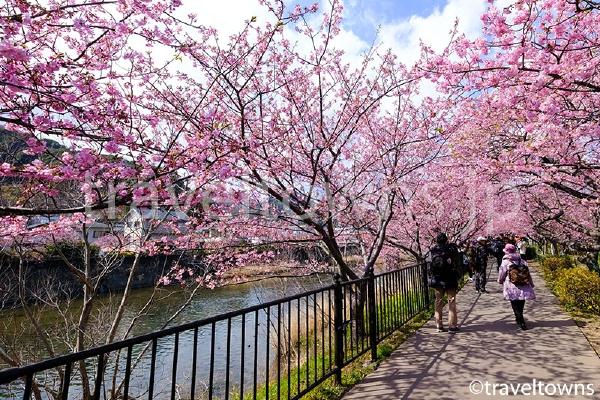 駅のすぐ近くでも川沿いの遊歩道でお花見できる