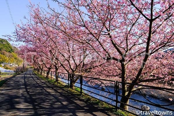 上流方面まで歩くと見頃の時期でも人が少なくのんびりお花見できる