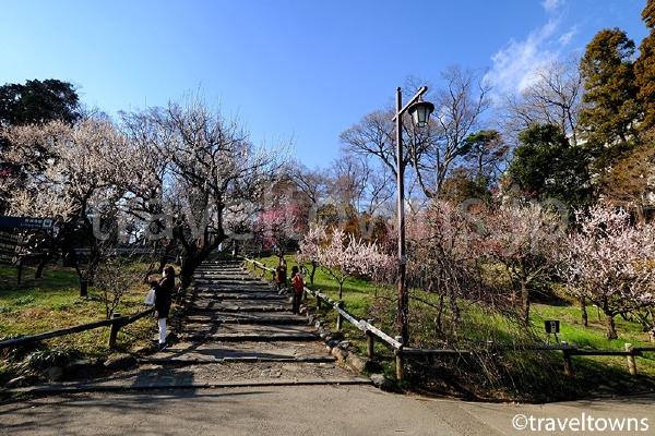 2月から3月上旬にかけては梅の花が楽しめる