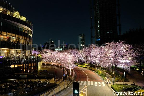 ミッドタウンの桜ライトアップ