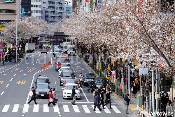 中野駅近くの桜並木
