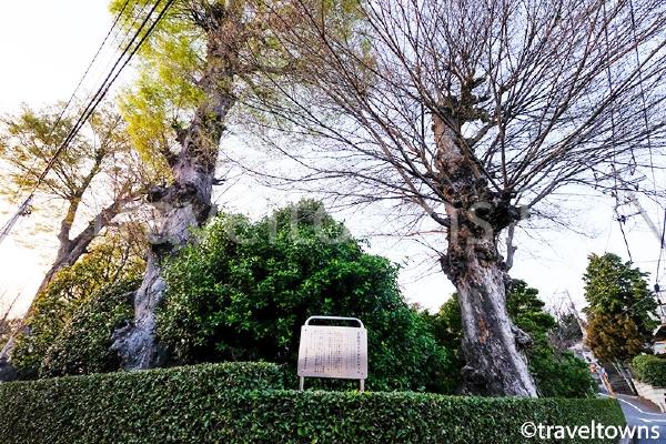 金蔵寺の木々