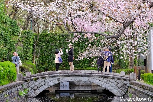 江戸東京たてもの園の桜
