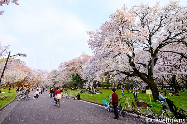 西口近くに広がる桜の園