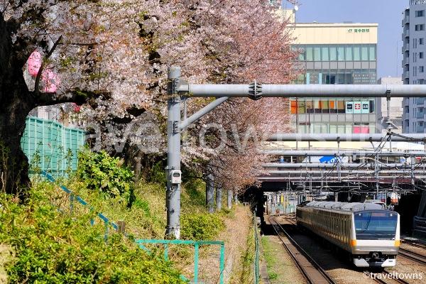 桜並木を走るJR中央線のE233系