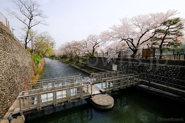 桜の季節には多摩川上沿いでお花見も楽しめる