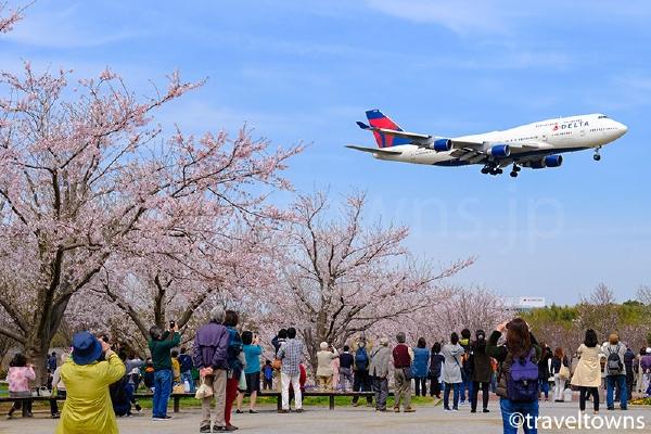 桜とデルタ航空のジャンボジェット機B747
