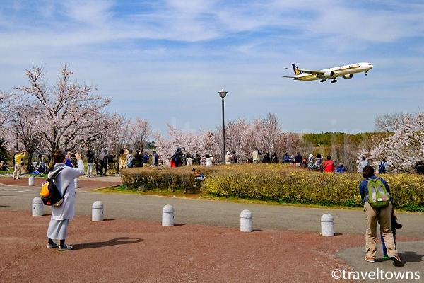 公園内のいたるところから飛行機が見える