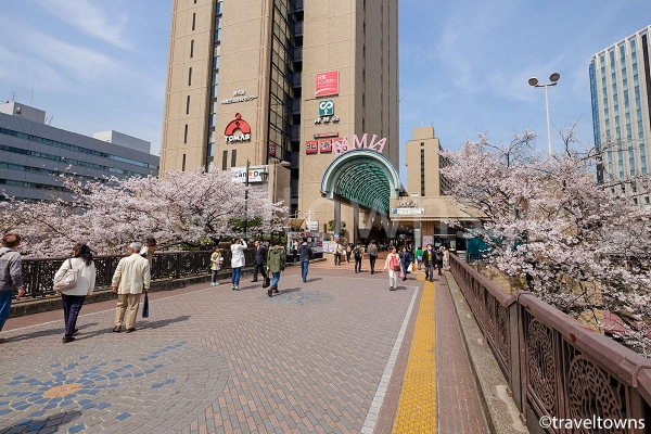 飯田橋駅前でも桜が見られる