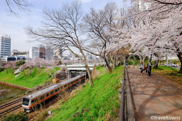 外濠の桜とJR中央線