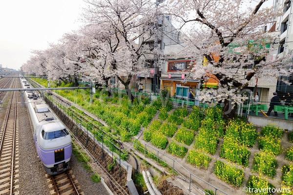 東中野の桜並木と特急スーパーあずさ