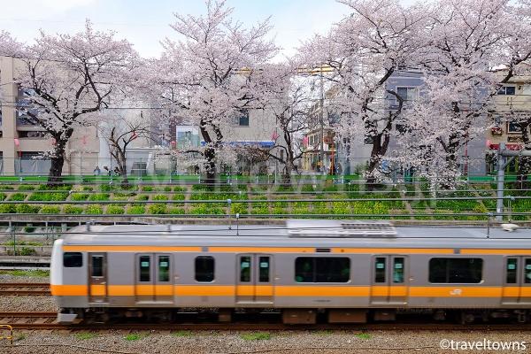 東中野の桜とJR中央線