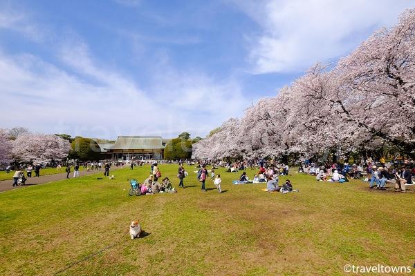 たてもの園前広場は人気のお花見スポット